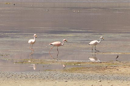All three species of flamingos that reside in South America can be seen on the lakes of the park.