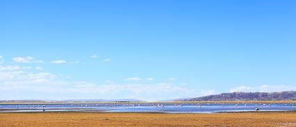 Flamingos on Laguna Achiri